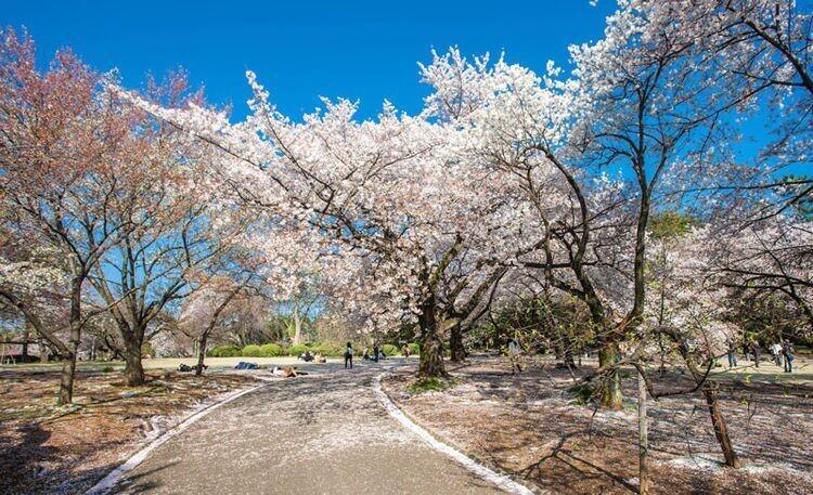 2020日本赏樱景点推介4大必去拍拖赏樱胜地 超美樱花打卡点全攻略